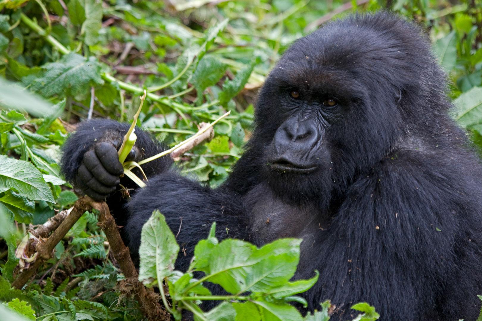 Rwanda Gorilla Trekking Wildlife