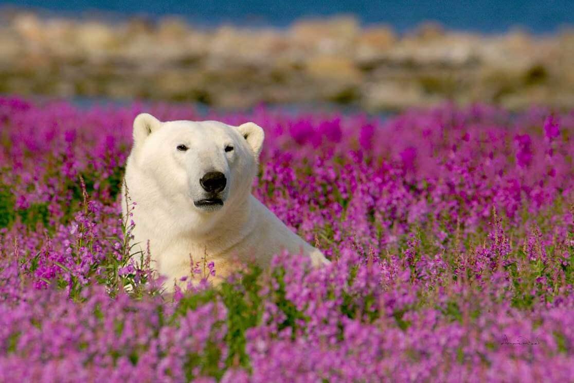 Canada - Bears