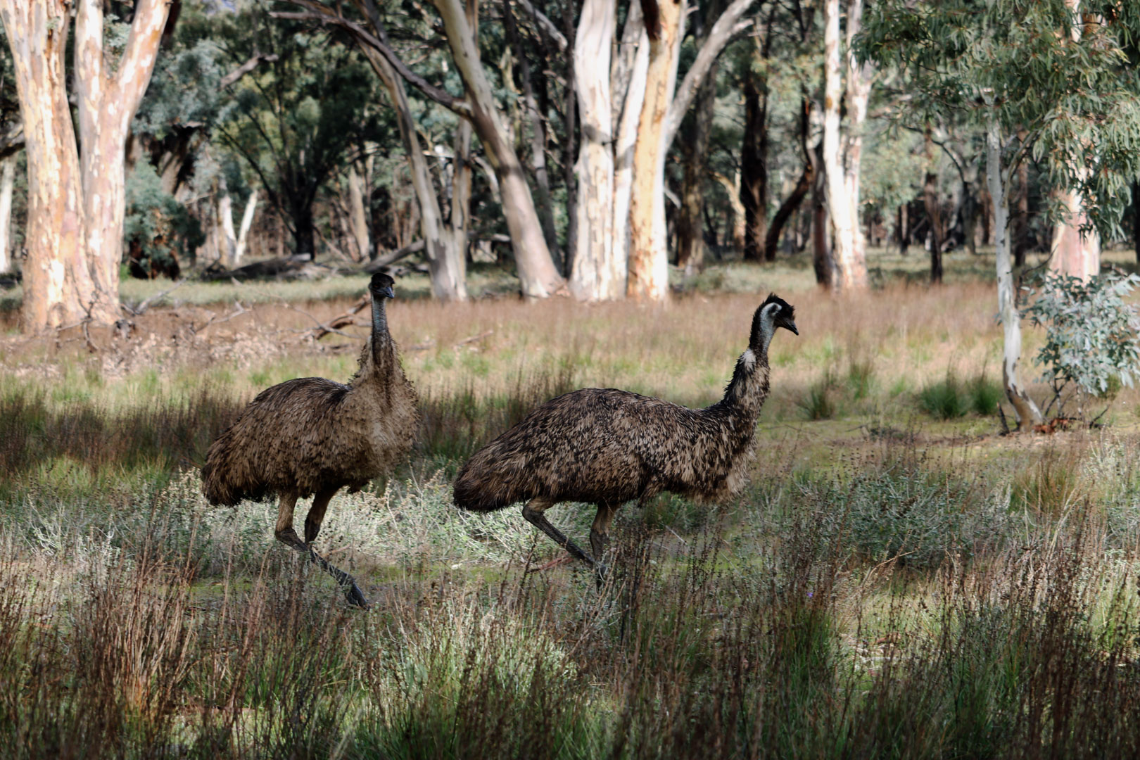 Arkaba-Flinders Range-South Australia
